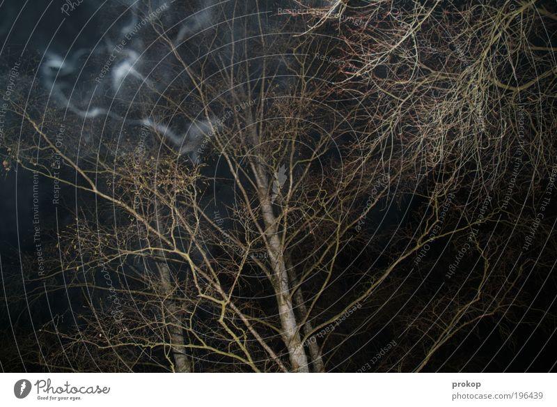 Waldbrand Umwelt Natur Landschaft Angst gefährlich Nervosität Ast Baum Rauch Farbfoto Gedeckte Farben Außenaufnahme Menschenleer Nacht Kunstlicht