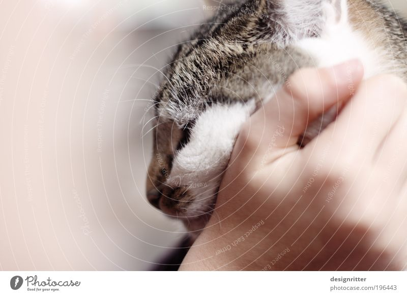 """""""Rrrrrrr rrrrrrrrrrrrrr rrrrrrrr … Hand ruhig Wärme Katze Freundschaft wild niedlich weich Warmherzigkeit Fell Vertrauen Lebensfreude genießen Haustier kuschlig"""