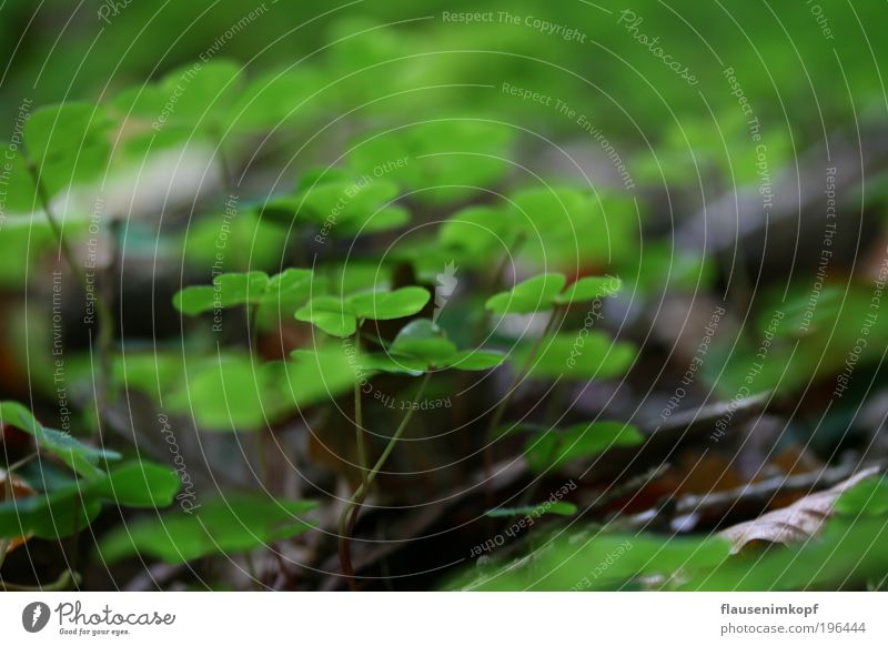 Waldboden Natur Pflanze Umwelt Herbst Erde Grünpflanze