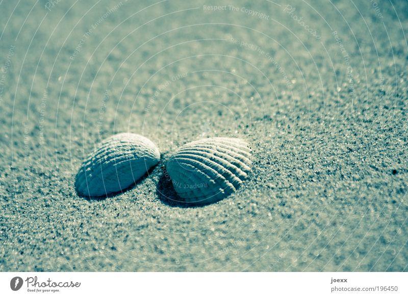 Kuschel-Muschel Ferien & Urlaub & Reisen Strand Liebe Gefühle Sand Glück Zusammensein kuschlig Sandstrand Strandgut gegenüber Muschelschale Landschaftsformen