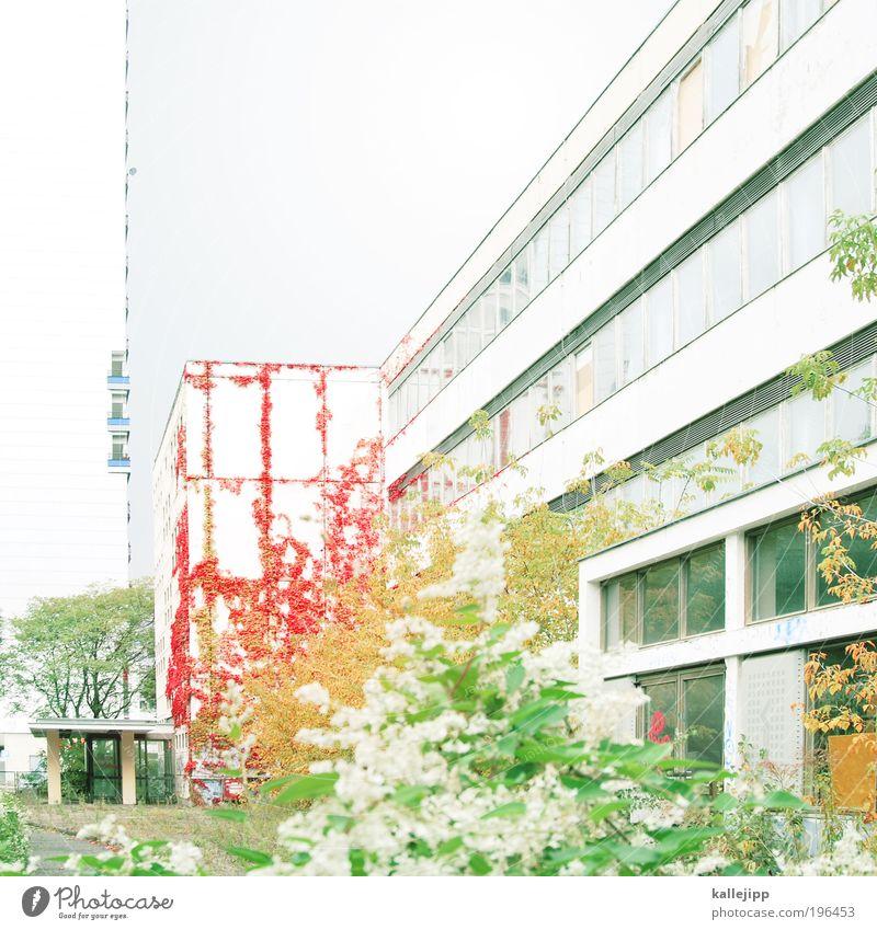 gras über die sache wachsen lassen? Baum Pflanze rot Blume Blatt Haus Wand Herbst Architektur Garten Gras Schule Mauer Hochhaus Sträucher