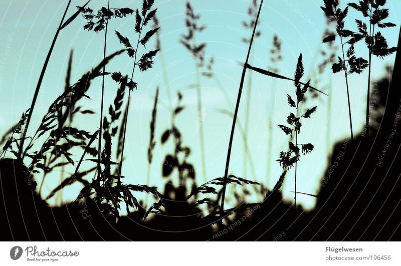 Wer brauch' Gras? Natur Pflanze Wiese Umwelt Park Feld Freizeit & Hobby Klima Lifestyle Sträucher lecker Lebensfreude genießen Rauschmittel atmen