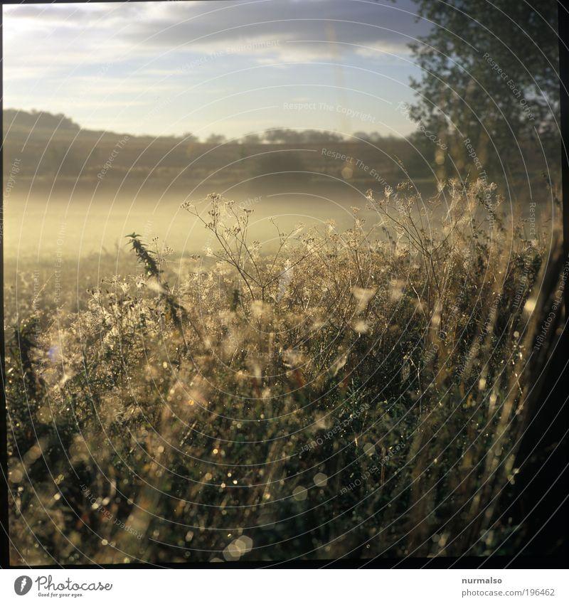 Glitzermorgen Natur Pflanze Sommer Tier Landschaft Gras Kunst Freizeit & Hobby Nebel glänzend Wassertropfen frisch ästhetisch Klima Wachstum außergewöhnlich