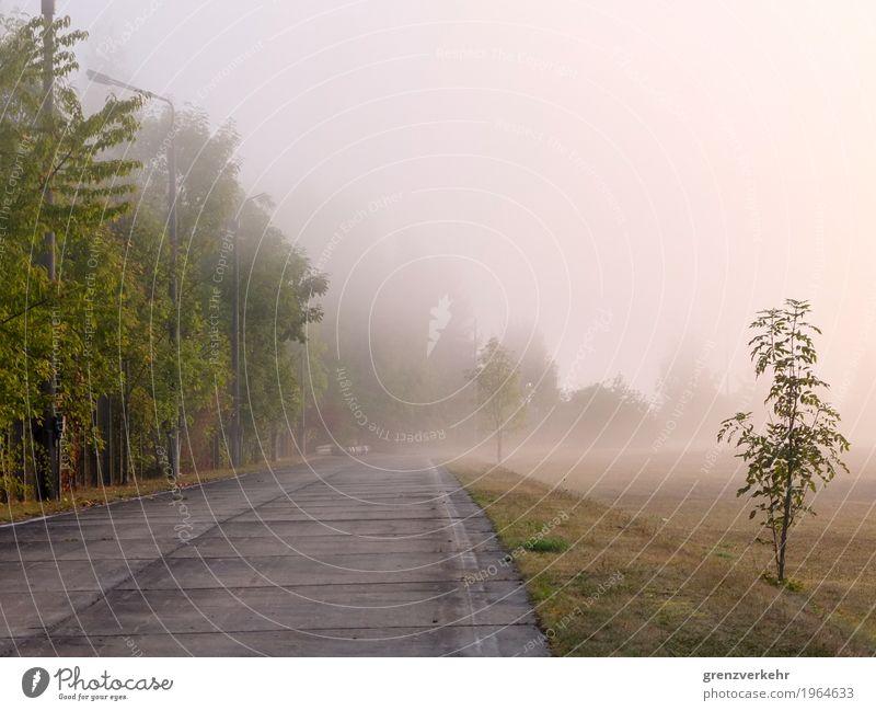 Grenznebel alt Straße kalt Nebel Straßenbeleuchtung Grenze Verkehrswege Personenverkehr Autofahren Nebelschleier Eisenach Nebelbank Autobahnraststätte
