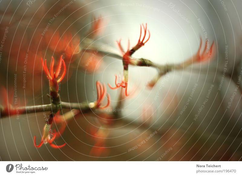 Flammenbaum Natur schön Baum rot Pflanze Sonne Sommer Tier Blatt Umwelt Landschaft Leben Frühling Glück Blüte träumen