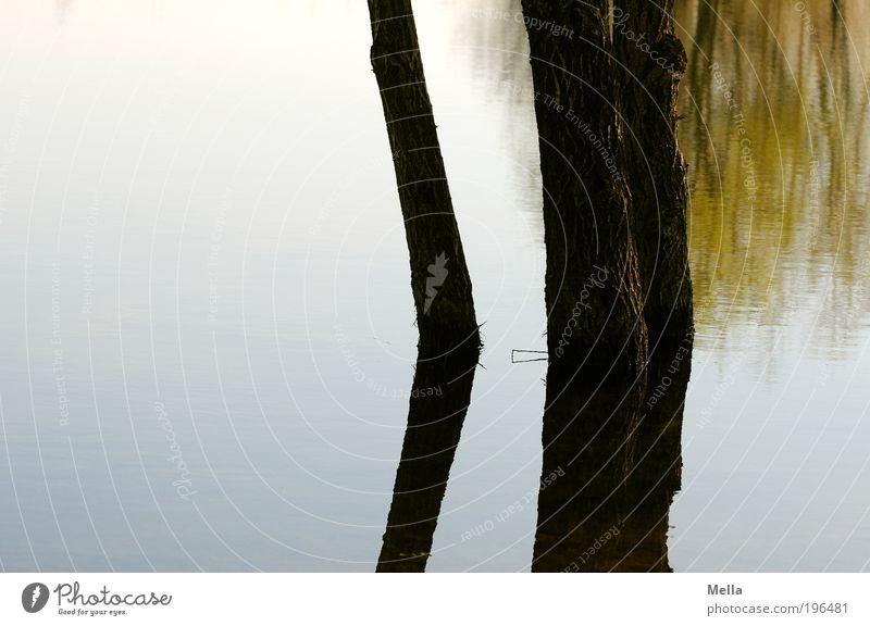 Stille Wasser Umwelt Natur Landschaft Pflanze Baum Seeufer Teich stehen Wachstum Flüssigkeit nass natürlich Stimmung ruhig geheimnisvoll Idylle Pause rein