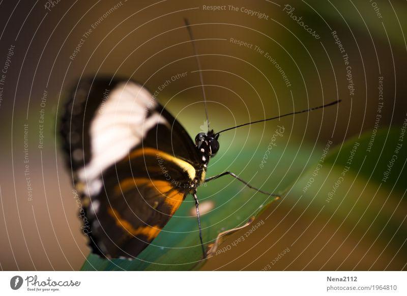 Schmollend... Umwelt Natur Luft Frühling Sommer Schönes Wetter Blatt Garten Park Wiese Feld Schmetterling 1 Tier braun leicht Leichtigkeit zerbrechlich