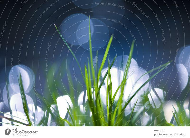 Gras Natur Frühling Wiese glänzend Wachstum fantastisch Freundlichkeit Fröhlichkeit frisch hell natürlich positiv blau grün Frühlingsgefühle Umwelt Umweltschutz