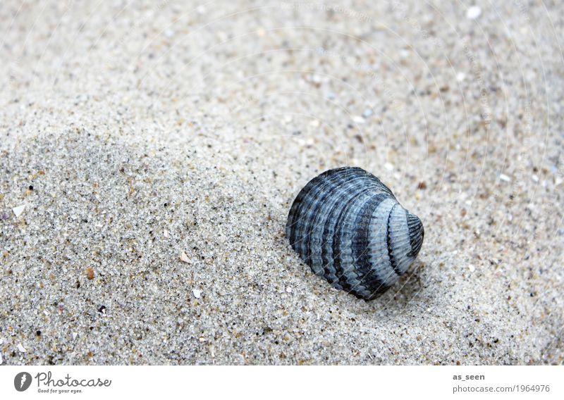 Sandmuschel Gesundheit Alternativmedizin Wellness harmonisch Wohlgefühl Sinnesorgane Ferien & Urlaub & Reisen Sommer Sommerurlaub Strand Meer Insel Strandbar