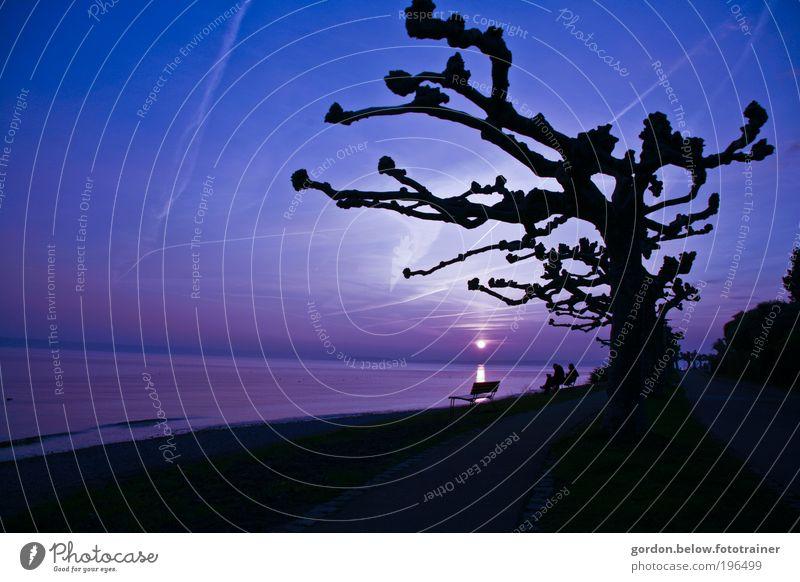 sundown Mensch Himmel blau Baum Ferien & Urlaub & Reisen Strand Landschaft Gefühle träumen Paar Schönes Wetter Seeufer genießen Partner Nachthimmel