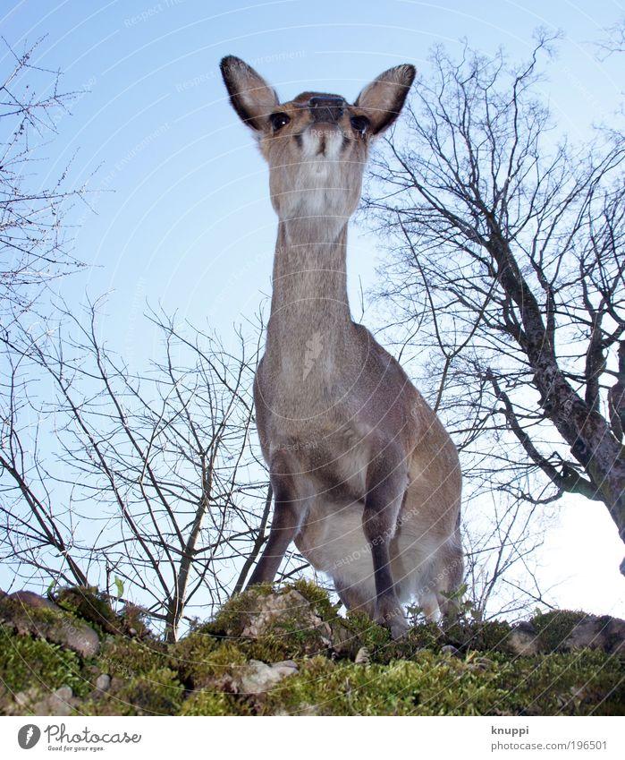 Reh Himmel Natur Baum Sommer Tier Wald Umwelt Berge u. Gebirge Freiheit Frühling Park Freizeit & Hobby Wildtier Ausflug Sträucher niedlich