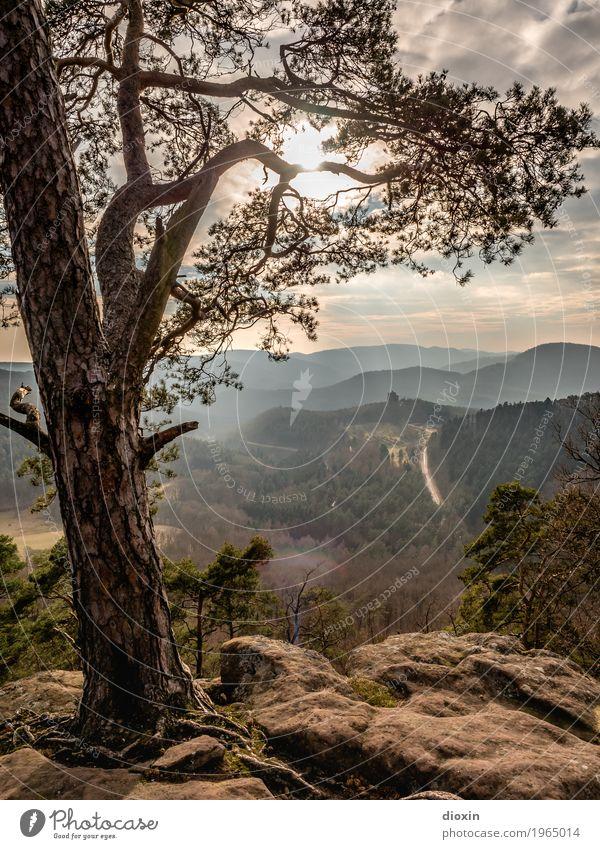 Alsace Ferien & Urlaub & Reisen Tourismus Ausflug Ferne Berge u. Gebirge wandern Umwelt Natur Landschaft Pflanze Sonne Sonnenlicht Baum Wald Pfälzerwald