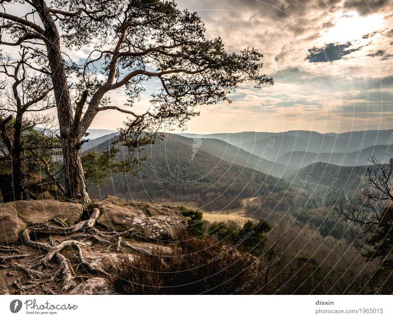 Alsace Ferien & Urlaub & Reisen Tourismus Ausflug Ferne Freiheit Berge u. Gebirge wandern Umwelt Natur Landschaft Pflanze Himmel Wolken Sonne Sonnenaufgang