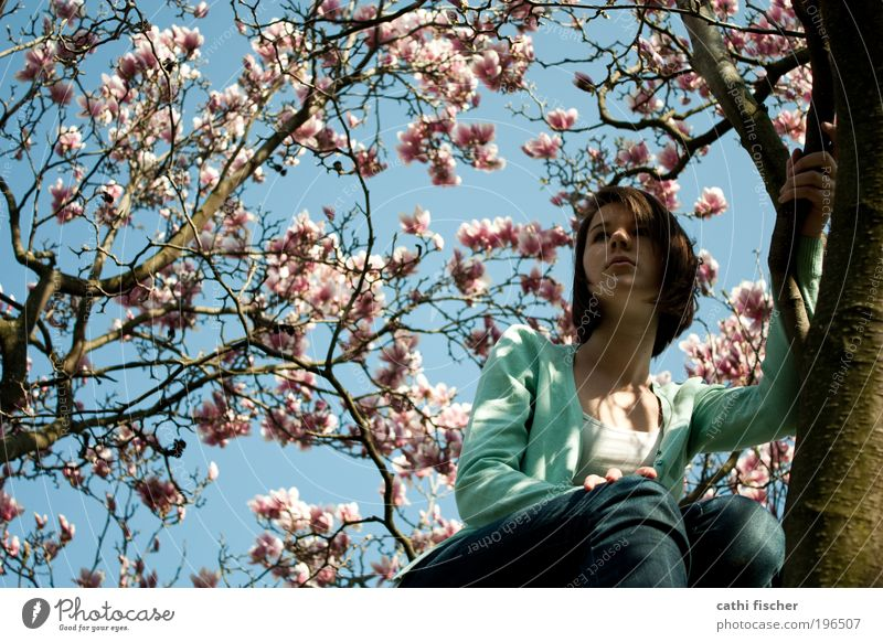 frühlingsgefühle Mensch Natur Jugendliche blau grün weiß Baum feminin Freiheit Blüte Denken Frühling Zufriedenheit rosa sitzen