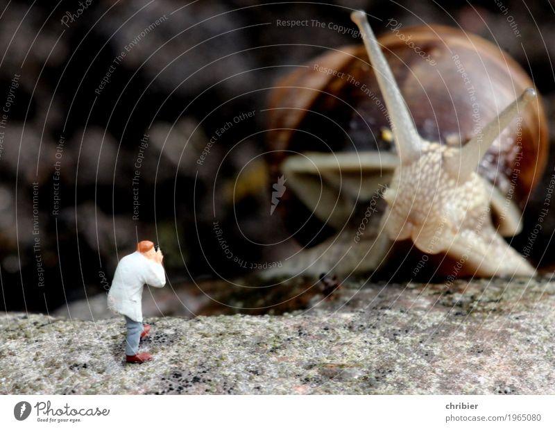 Bitte recht freundlich! Tier Garten Fotografie entdecken Schnecke Safari