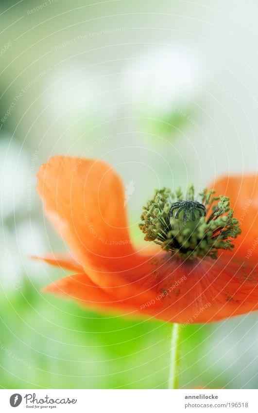 Blumenstrauß Natur grün Pflanze rot Sommer Gefühle Blüte Frühling Glück Feld Dekoration & Verzierung Häusliches Leben zart Lebensfreude Leidenschaft