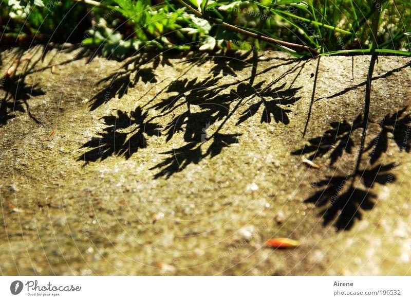 Pflasterschatten Natur grün Pflanze Blatt schwarz Leben Wiese Gras Frühling Stein braun Wachstum Lebensfreude natürlich Schönes Wetter positiv