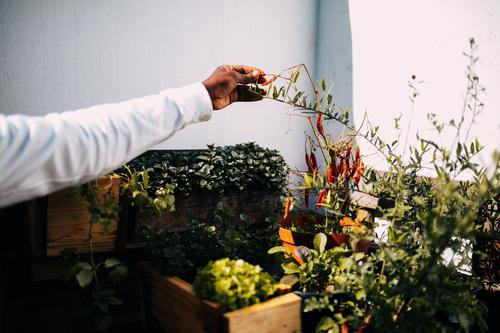 Afroamerikanischer Mann bei der Gartenarbeit Topf Lifestyle Freizeit & Hobby Mensch maskulin Jugendliche Hand Pflanze Balkon frisch grün Afroamerikaner