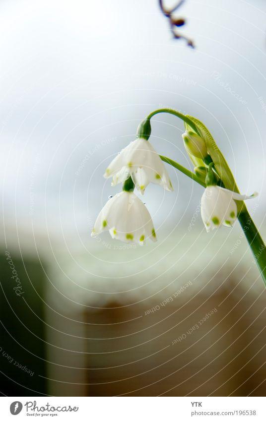 After the rain Himmel Natur Pflanze grün Wasser Blume Blatt Umwelt Frühling Blüte Stimmung Regen Wetter Wachstum frisch Klima