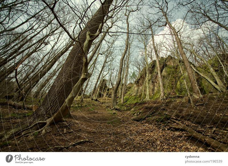 Waldwege Natur Baum ruhig Ferne Umwelt Landschaft Leben Berge u. Gebirge Freiheit Bewegung Wege & Pfade träumen Zeit Kraft Felsen