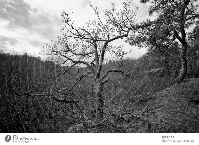 Alter Natur Baum ruhig Einsamkeit Wald Leben Tod Berge u. Gebirge Freiheit träumen Landschaft Kraft Umwelt Zeit ästhetisch Wachstum