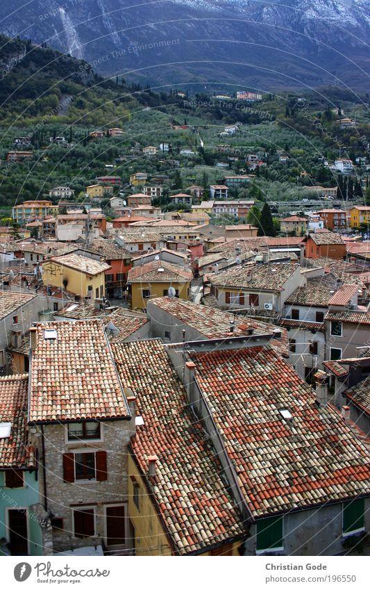 Malcesine Natur grün blau Pflanze rot Haus Tier Berge u. Gebirge Landschaft Umwelt Dach Italien Fliesen u. Kacheln Schönes Wetter Gebäude Südtirol