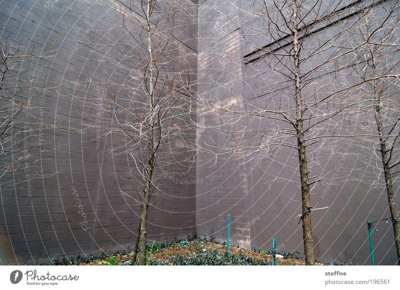 naturban Natur Pflanze Baum Hochhaus Fassade Beton Stein Betonwand Ast Geäst kahl Farbfoto Außenaufnahme Tag
