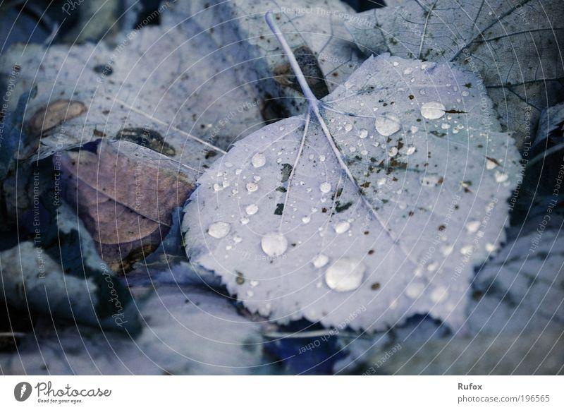 Gar sehr verzwickt ist diese Welt ... Natur alt Pflanze Blatt Wiese Herbst Gras Park Erde dreckig Wassertropfen Boden Tropfen Laubwald