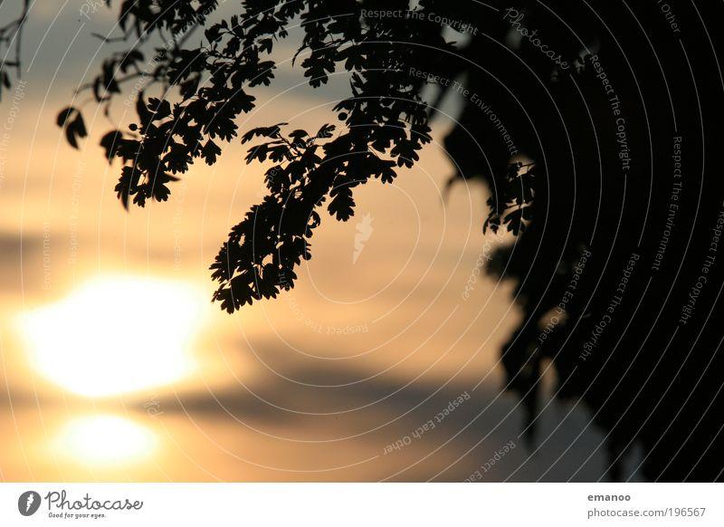 Eiche Natur alt Himmel Baum Sonne Pflanze Ferien & Urlaub & Reisen Blatt Wolken gelb Wärme Wetter Umwelt gold Wachstum Sträucher