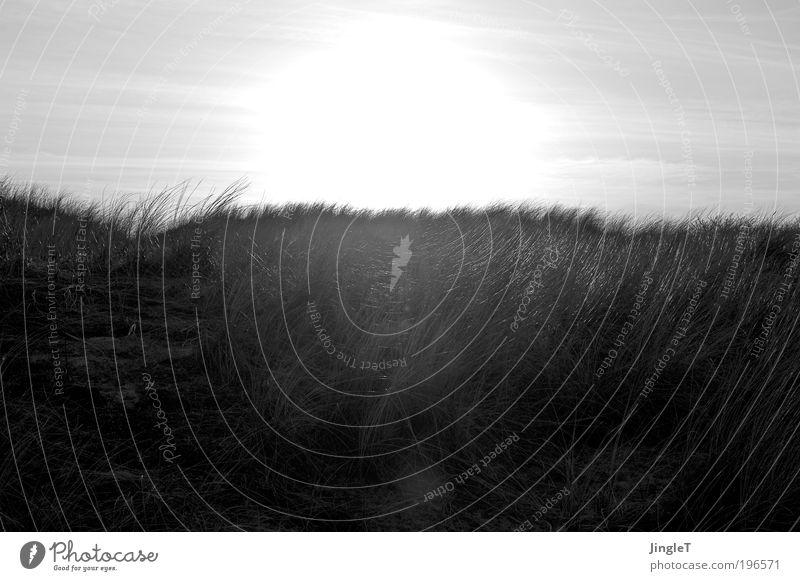 Silberskyline Strand Sand Dünen Gras Himmel Sonne glänzend silber Abend Grauwert Insel Niederlande Ameland Ziselierung fein zart dezent ruhig Einsamkeit
