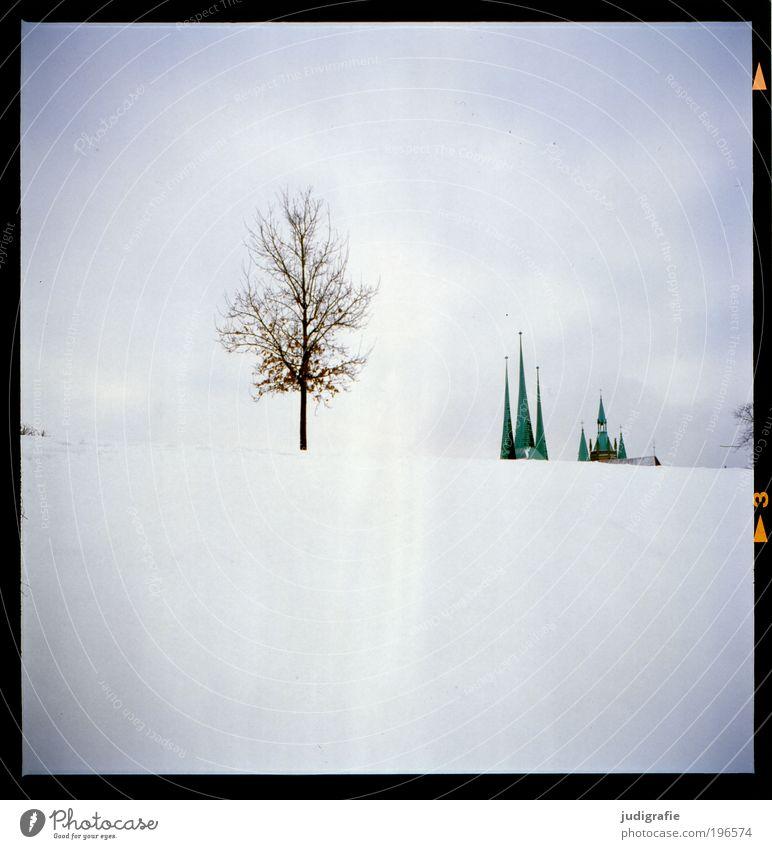 Erfurt Umwelt Natur Landschaft Klima Schnee Baum Park Hügel Stadt Menschenleer Kirche Dom Gebäude Architektur Dach Sehenswürdigkeit Wachstum Einsamkeit