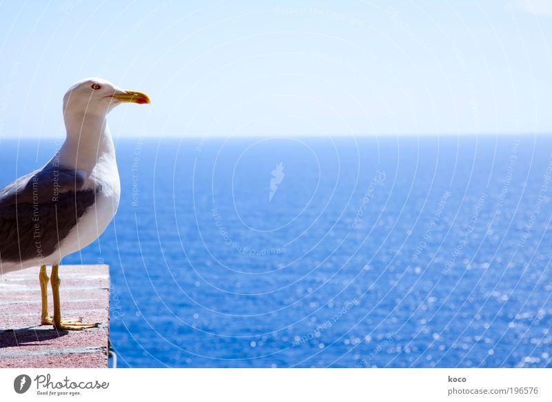 Emma Natur Himmel weiß Sonne Meer blau Sommer Ferien & Urlaub & Reisen schwarz Tier gelb Ferne Vogel stehen Tiergesicht Flügel