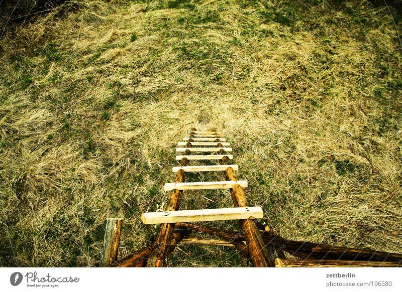 Hochstand Natur Erholung Wiese Gras Garten Park hoch Jagd tief Leiter aufsteigen steil Jäger Abstieg Hochsitz April