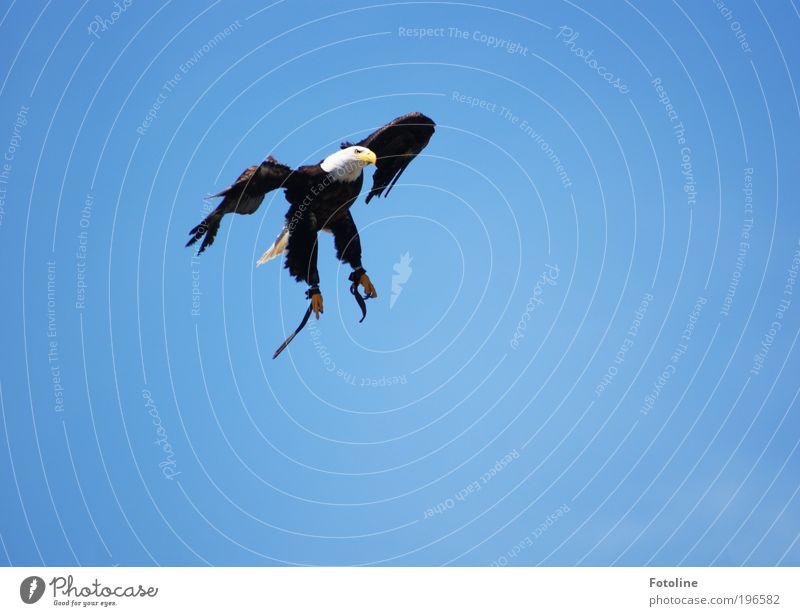 Für Mella! Umwelt Natur Tier Himmel Wolkenloser Himmel Sonnenlicht Sommer Klima Wetter Schönes Wetter Wildtier Vogel Flügel Krallen ästhetisch außergewöhnlich