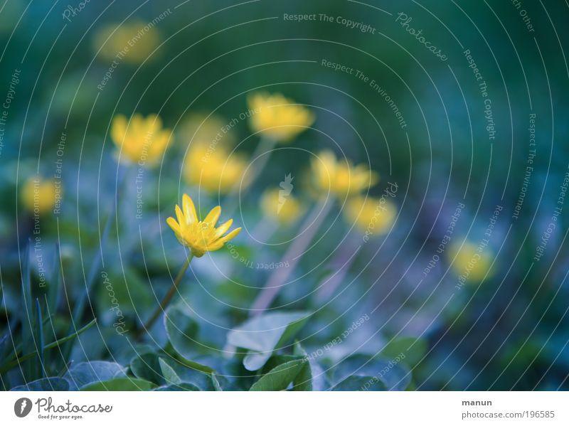 Blümchen Natur blau grün Erholung Blume Blatt ruhig Umwelt gelb Wiese Frühling Blüte Park frisch Fröhlichkeit Lebensfreude
