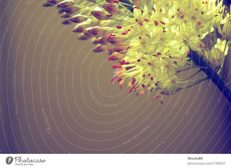 unbekannte Blüte Natur Pflanze exotisch retro Farbfoto Innenaufnahme Nahaufnahme Detailaufnahme Textfreiraum links Textfreiraum unten Hintergrund neutral Tag