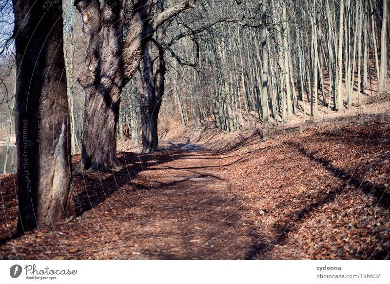 Warten auf Grün Natur Baum Blatt ruhig Wald Ferne Erholung Umwelt Leben Landschaft Bewegung Wege & Pfade träumen Zeit Freizeit & Hobby Ausflug