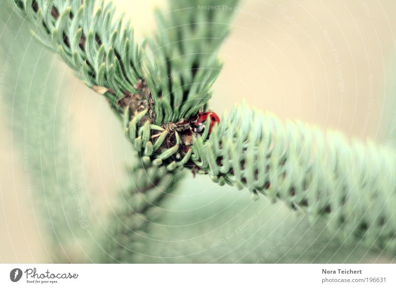 Sicheres Versteck Umwelt Natur Landschaft Pflanze Tier Frühling Sommer Baum Sträucher Stachel Zweig Ast Park Käfer Marienkäfer entdecken Wachstum warten