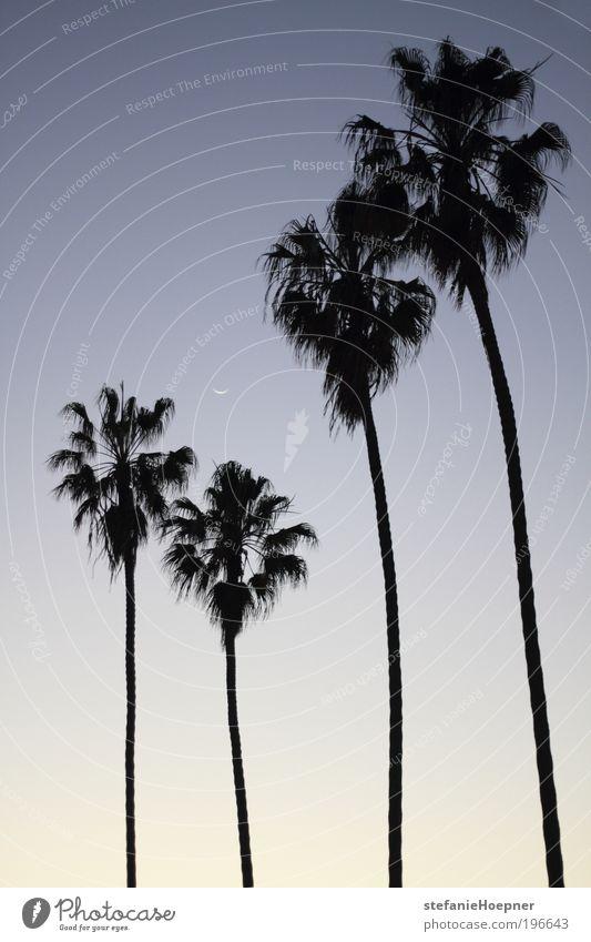 4 palm trees Ferien & Urlaub & Reisen Tourismus Ferne Sommer Sommerurlaub Natur Landschaft Tier Himmel Mond Palme exotisch heiß blau schwarz weiß Sehnsucht