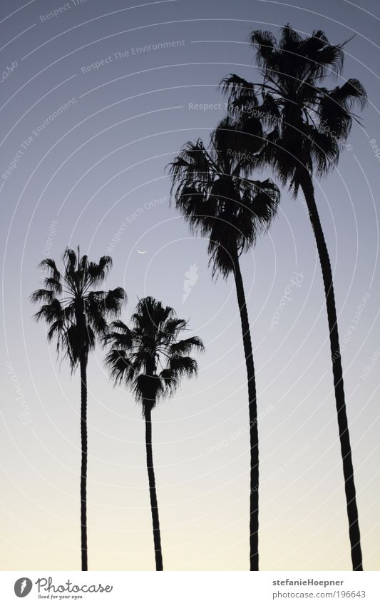 4 palm trees Himmel Natur blau weiß Ferien & Urlaub & Reisen Sommer Tier schwarz Ferne Landschaft Tourismus Sehnsucht heiß Mond Palme exotisch