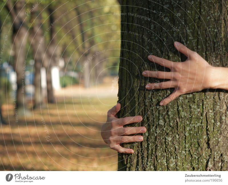 Liebe zur Natur Jugendliche Hand Baum ruhig Erwachsene Leben Gefühle träumen Freundschaft Park Zusammensein Kraft natürlich Finger
