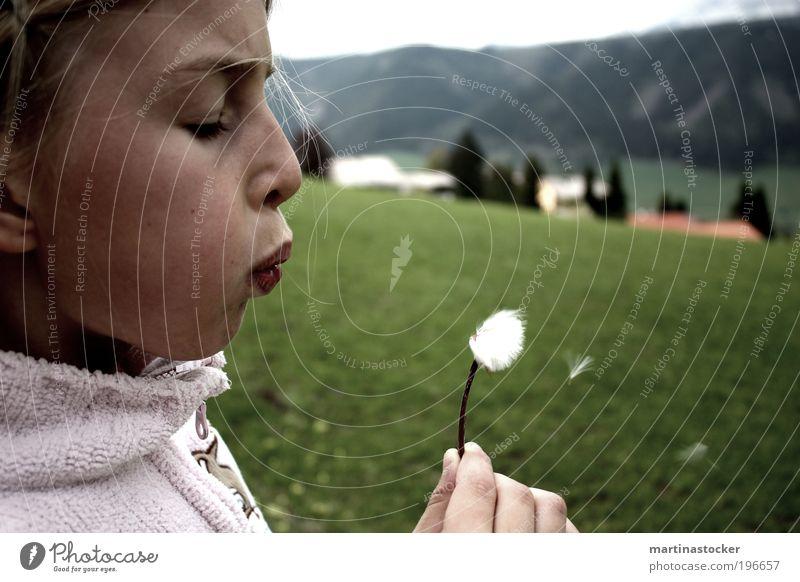 Pusteblume Mensch Kind Natur Mädchen Gesicht feminin Wiese Landschaft Kopf Haare & Frisuren Kindheit blond Wind Mund fliegen Lippen