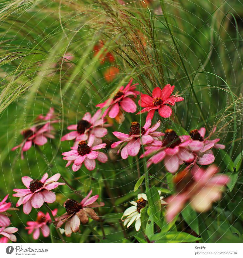 Blumen im Gras Natur Pflanze Sommer Farbe grün schön rot Blüte Garten rosa Blühend malerisch Blütenblatt sommerlich