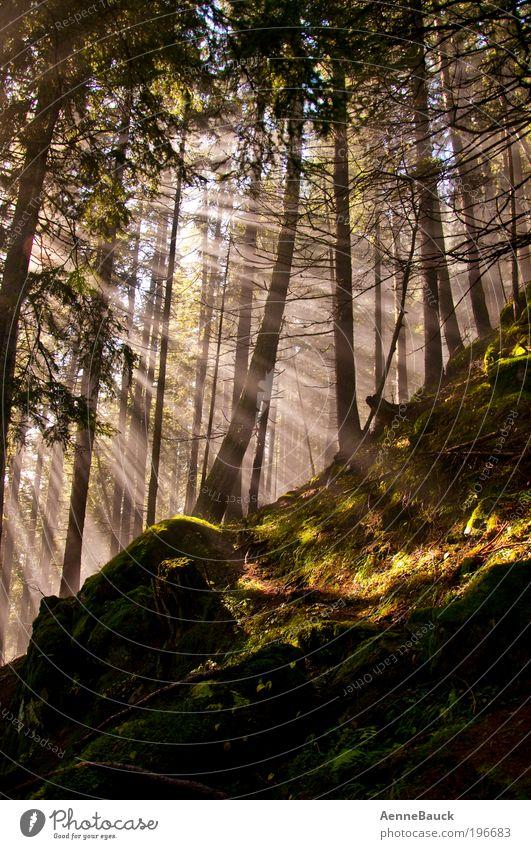 Lichtblicke Natur schön Baum Sonne grün Wald Leben Erholung Berge u. Gebirge Bewegung träumen Stimmung braun gold Romantik Lebensfreude