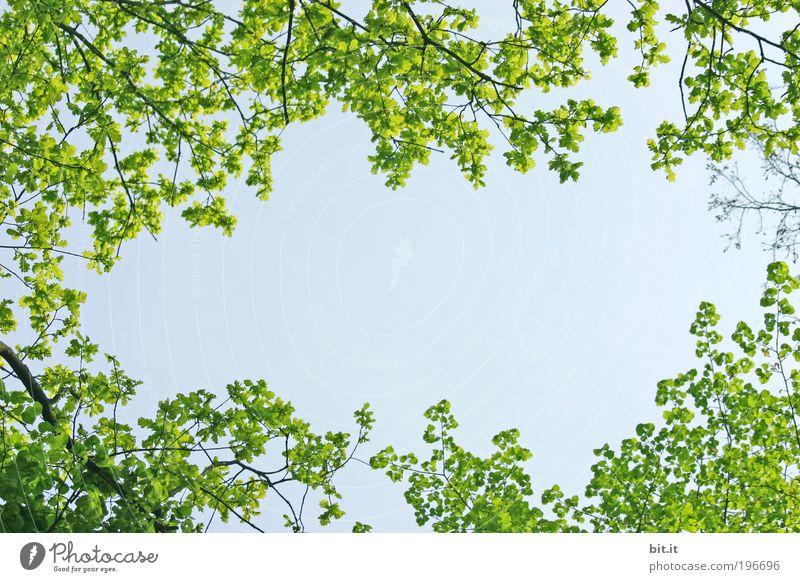 FRÜHLING LIEGT IN DER LUFT Natur Himmel grün Pflanze Sommer Blatt Frühling Luft Hintergrundbild Umwelt frisch Wachstum Ecke Aussicht Wandel & Veränderung Schönes Wetter