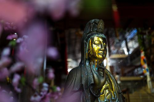 Goldene Buddha Statue mit Lila Blumen Bokeh Skulptur Colombo Sri Lanka Asien Zufriedenheit selbstbewußt Willensstärke Liebe Mitgefühl friedlich Güte
