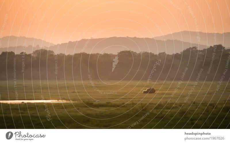 Jeep bei Sonnenuntergang im National Park, Sri Lanka Jagd Ferien & Urlaub & Reisen Tourismus Abenteuer Safari Wiese Urwald Fahrzeug Geländewagen beobachten