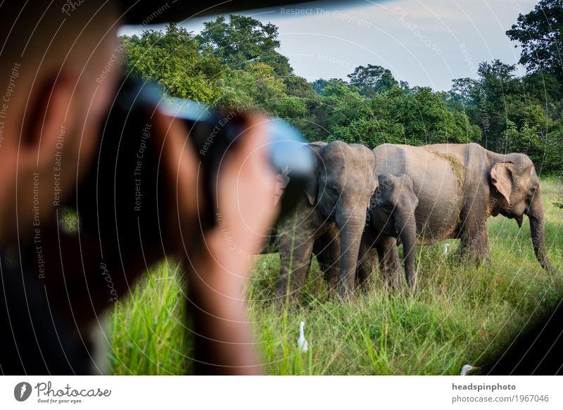 Foto-Safari mit Elegantem Sri Lanka Mensch Ferien & Urlaub & Reisen Hand Tier Ferne Umwelt Kopf Tourismus maskulin Ausflug groß Abenteuer beobachten entdecken