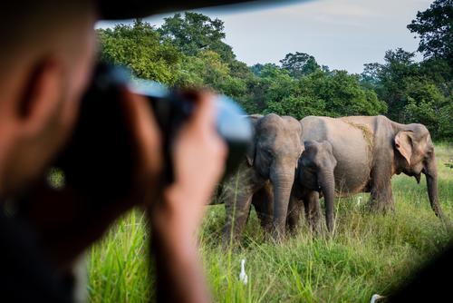 Foto-Safari mit Elegantem Sri Lanka Ferien & Urlaub & Reisen Tourismus Ausflug Abenteuer Ferne maskulin Kopf Hand 1 Mensch Naturschutzgebiet Tier Elefant Herde