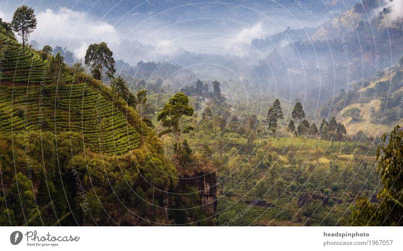 Landschaft mit Teeplantagen in Sri Lanka Natur Ferien & Urlaub & Reisen grün Erholung Ferne Wald Berge u. Gebirge Tourismus Ausflug Nebel wandern Idylle